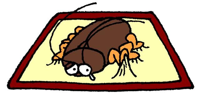 ゴキブリと粘着シート