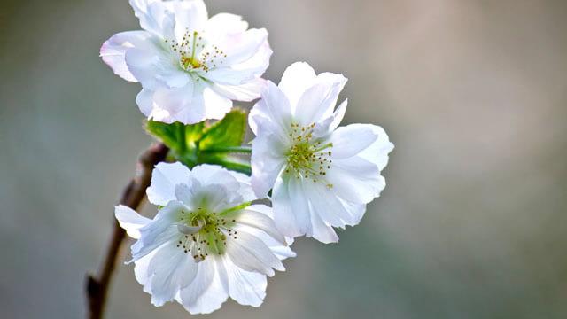 キレイな花