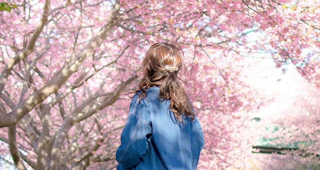 桜の花と女性