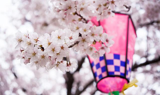 桜とグッズ