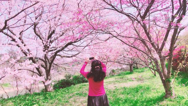 桜の写真を撮る女性