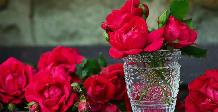 キレイなバラの花