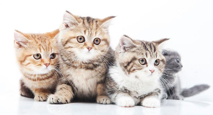 一点を見つめる子猫たち