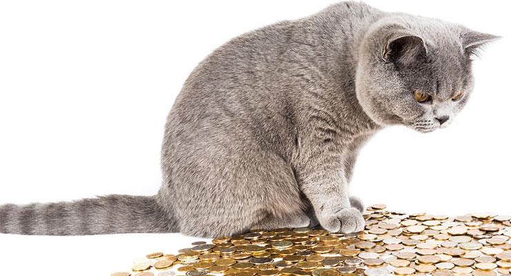 お金をながめる猫