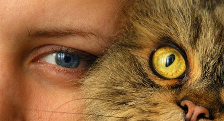 頬ずりする猫
